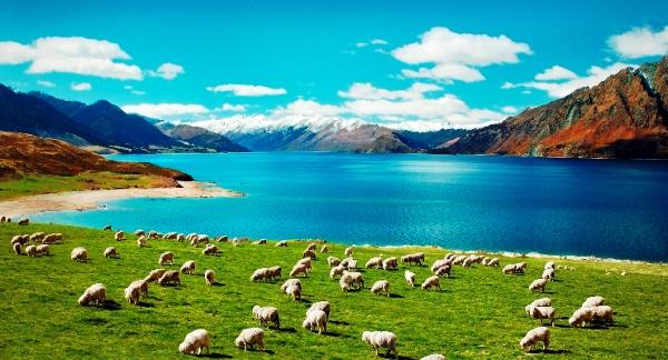 Kết quả hình ảnh cho thiên nhiên hoang dã tại New Zealand